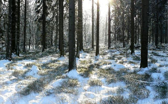 Nordische Fichte ist das beste Gartenhaus Holz
