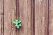 Gartenhaus kaufen, aber vorher auf die Qualität von Gartenhaus-Holz achten!